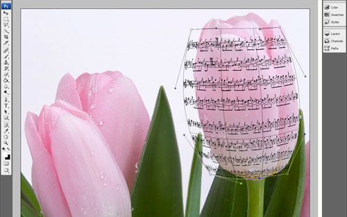 The Effect of Music Notes on the Flowers