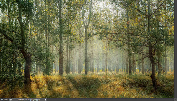 Add a warm atmosphere effect to a forest image 1