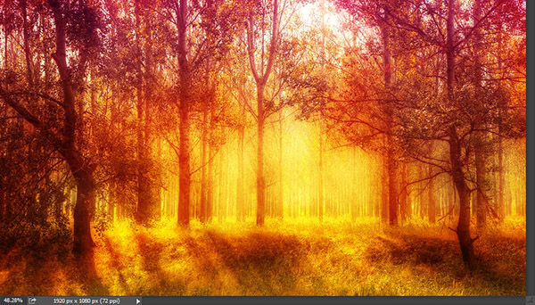 Add a warm atmosphere effect to a forest image 10