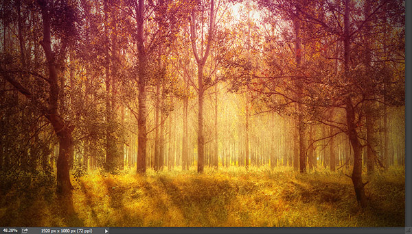 Add a warm atmosphere effect to a forest image 6