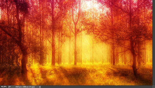 Add a warm atmosphere effect to a forest image 8