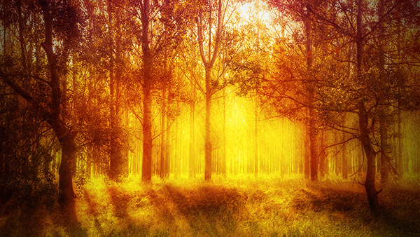 Add a warm atmosphere effect to a forest image