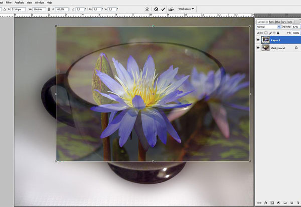 Create a Water Lily in a Cup Effect in Photoshop 10