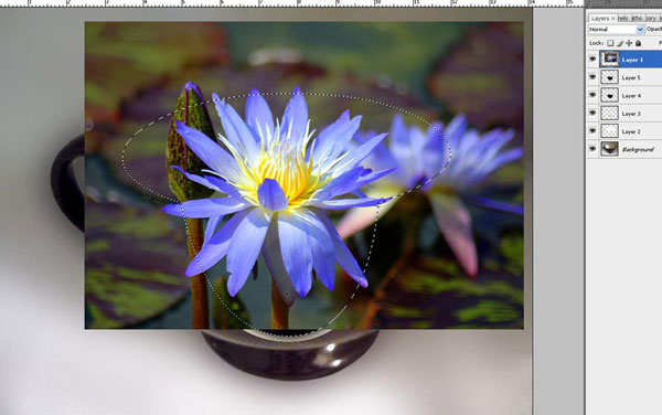 Create a Water Lily in a Cup Effect in Photoshop 23