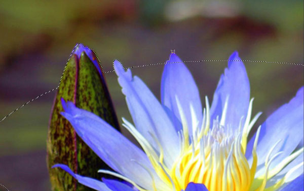 Create a Water Lily in a Cup Effect in Photoshop 24