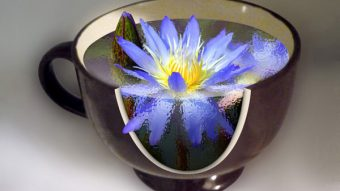 How to Create a Water Lily in a Cup Effect in Photoshop